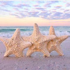 "Gulf Coast Life (@mygulfcoastlife) on Instagram: ""There is so much life and beauty on the Gulf Coast! PhotoCred: @followmetolongboatkey . . . . . .…"" Beach Art, Ocean Beach, Ocean Theme Decorations, Beach Room Decor, Beach Scenery, Beach Town, Beach House, Beach Quotes, Science Nature"