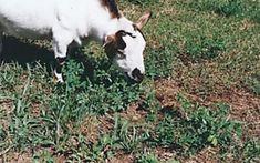 La mia storia: la storia di una bambina, di una mamma e di un blog Cow, Mamma, Animals, Animales, Animaux, Animal Memes, Animal, Animais, Dieren