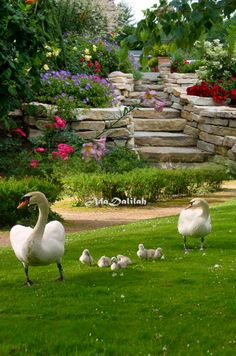 Beautiful Birds, Beautiful Gardens, Animals Beautiful, Cow Pictures, Funny Animal Pictures, Outdoor Life, Outdoor Gardens, Baby Animals, Funny Animals