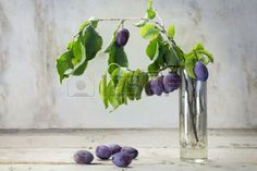 44552904-branch-with-organic-plums-in-a-glass-vase-and-some-fallen-plums-on-a-rustic-wooden-table-old-gray-pl.jpg (350×233)