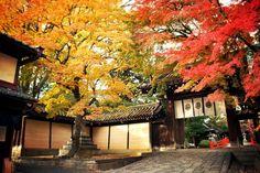 今宮神社:東門の紅葉