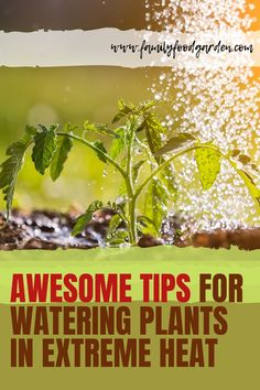 Here are some awesome tips you need to know for watering your plants in extreme heat! We are going to be looking at the dos and don'ts of watering plants in the summer heat and how to keep your plants happy and healthy. In order to maintain your garden through the tough summers, you will need to follow some basic steps. Check this pin and let us know what you think! #wateringplants #gardening #wateringgarden Watering Plants, Self Watering Containers, Container Gardening, Gardening Tips, Indoor Gardening, Flower Gardening, Vegetable Gardening, Indoor Plants, Water Irrigation System