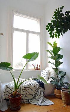 Pilea, Monstera und Epiprenum – um nur einige wenige zu nennen – heißen meine geliebten, grünen Mitbewohner. Angefangen haben diese Liebesgeschichten mit der Urban Jungle Bewegung, die hier auf SoLebIch noch immer anhält. Einer überschwänglichen Adoptionsphase folgte ein Kennen- und Kümmernlernen. Dabei wuchs mit meinen Zimmerpflanzen zu Hause auch mein grüner Daumen erst nach und nach. Heute bin ich soweit, dass ich mich traue, eine kleine Übersicht der Bedürfnisse der schönsten…