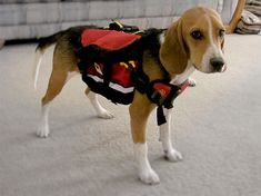 Disaster Preparedness for Your Dog or Cat