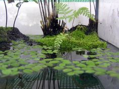 Moss from outside in newt tank