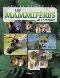 Resultado de imagen para imagier les mammiferes