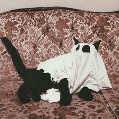 Cat costume idea