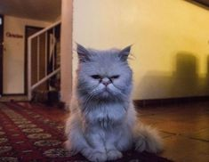 What to Do If Your Cat's Peeing On the Rug Instead of the Litterbox