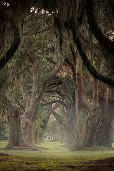 Avenue of Oaks #seaisland www.seaisland.com