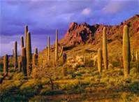 Tucson, AZ - love the desert landscape!