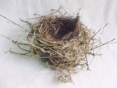 Real Birdu0027s Nest   Genuine Bird Home   Found Supply   Natural Architect    Medium Size Grass Pine U0026 Twig House For Feathered Friends And Eggs