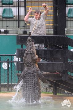 Wes feeding a crocodile at Australia Zoo Best friends with Steve Irwin