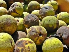 Uses for black walnuts