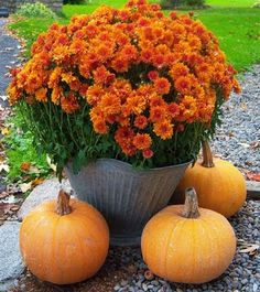 Fall arrangement in a galvanized coal buckets!  Nice for any entryway!
