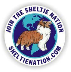 Love my Sheltie!