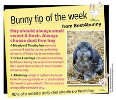 Bunny tip - hay types and how to pick good quality hay