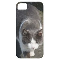 Adorable grey and white cat iPhone case Case For The iPhone 5