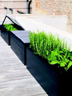 Build stylish flower boxes with a tacker - Diy Garden Box Ideas Plants For Raised Beds, Raised Garden Beds, Culture D'herbes, Garden Seating, Garden Boxes, Flower Boxes, Dream Garden, Diy Garden, Backyard Landscaping