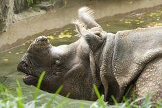 Animals at the Philadelphia Zoo