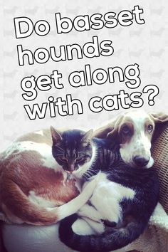 Fortunately, our basset and our cat love one another very much. Here's some tips on how to introduce a new basset pup to a household with a cat! Basset Hound, Cat Love, Pup, Household, Cats, Gatos, Dog Baby, Cat, Kitty