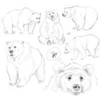 Bear sketches by Natello Pencil Drawings Of Animals, Animal Sketches, Art Sketches, Art Drawings, Bear Sketch, Nature Sketch, Animal Print Outfits, Bear Pictures, Art Thou