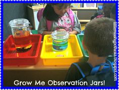 Little Miss Hypothesis - Lessons from the Science Lab! Grow Me Observation Jars!