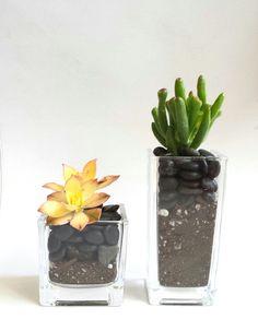 Columnar Vases with Succulent Plants (Set of 2)