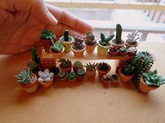 suculentas miniatura