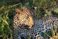 Pilanesberg Tented Safari Camp | Specials 4 Africa