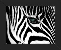 16x20 Poster Print FRAMED Zebra Close Up Innerwallz http://www.amazon.com/dp/B00FAWNOFQ/ref=cm_sw_r_pi_dp_CwR4ub1F78HZM