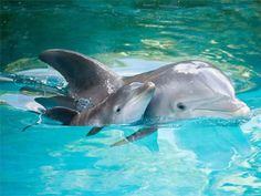 Which animal are you most like? | If you were an animal, you would be a dolphin! You love to swim, and you're very kind and intelligent.