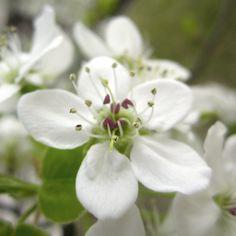 #White #Flower #Flowers #Plant #Plants #Pretty #Beauty #Beautiful #Outside #Nature #MotherNature #Green