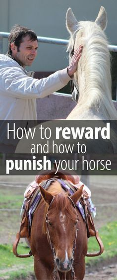 to Reward and Punish Your Horse The best ways to reward or to punish your horse. So you can keep improving and your horse can stay happy.The best ways to reward or to punish your horse. So you can keep improving and your horse can stay happy. Horse Training Tips, Horse Tips, My Horse, Horse Riding, How To Ride A Horse, Riding Gear, Trail Riding, Horse Information, Types Of Horses