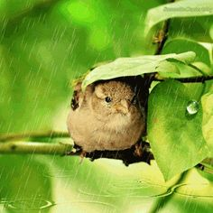 Even the birds of the air seek shelter from the elements,I rely on You Lord for everything You are my shelter my rock I need You more each day Prov 18:10 the name of The Lord is a strong tower the righteous run in to it and are safe.