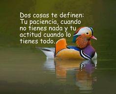 Dos cosas te definen: Tu paciencia y tu actitud!