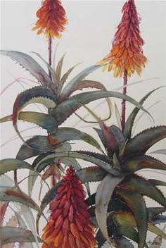 Watercolor Artists, Watercolor Paintings, Flower Paintings, Painting Flowers, Watercolours, South African Art, Flower Art, Art Flowers, Botanical Art