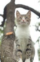 Homemade Cure for Ear Mites in Cats