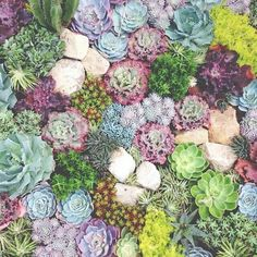 Beautiful coral reef inspired garden. I'd love to try recreating it.