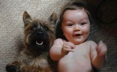 happy cairn terrier and baby