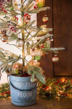 A Shady Grove Christmas