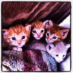 Farm kitties in Enid, OK