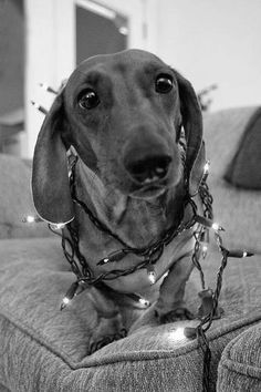 Miniature Dachshunds, Cutest Animals, I Love Dogs, Cute Animals, Adorable Animals
