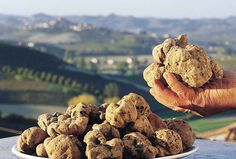 Delicious truffles from Istria!
