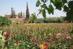 The Garden of Eden Is in Marrakech   FATHOM Travel Blog and Travel Guides