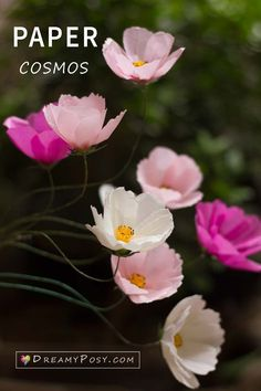 How to make paper Cosmos flower from tissue paper, free template Wafer Paper Flowers, How To Make Paper Flowers, Large Paper Flowers, Tissue Paper Flowers, Giant Paper Flowers, Diy Flowers, Fabric Flowers, Paper Roses, Flower Crafts