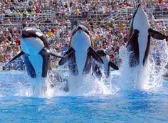 Sea World San Diego Tickets & Transportation - Hollywood Adventure Tour & Them Parks