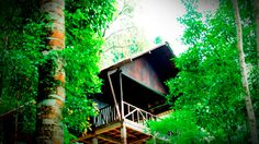 Drool away with our tree house like spacious cottages at Meriyanda Nature Lodge — at Coorg.  #coorg #coorgresort # Resort in Coorg http://www.meriyanda.com/