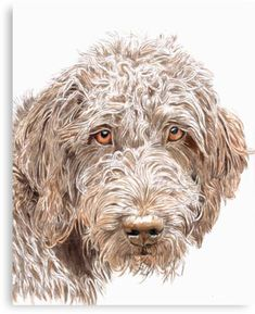 Chocolate labradoodle by Yvonne Carter. Looks like my baby girl. Chocolate Labradoodle, Dog Paintings, Watercolor Paintings, Animal Drawings, Art Drawings, Dog Pencil Drawing, Labradoodles, Goldendoodles, Dog Portraits