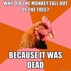 Anti-joke chicken makes me laugh