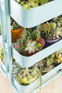 Succulents in an Ikea Cart - Succulents and Sunshine